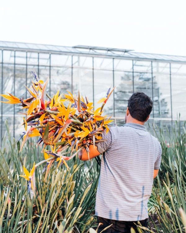 Local bouquet birds of paradise
