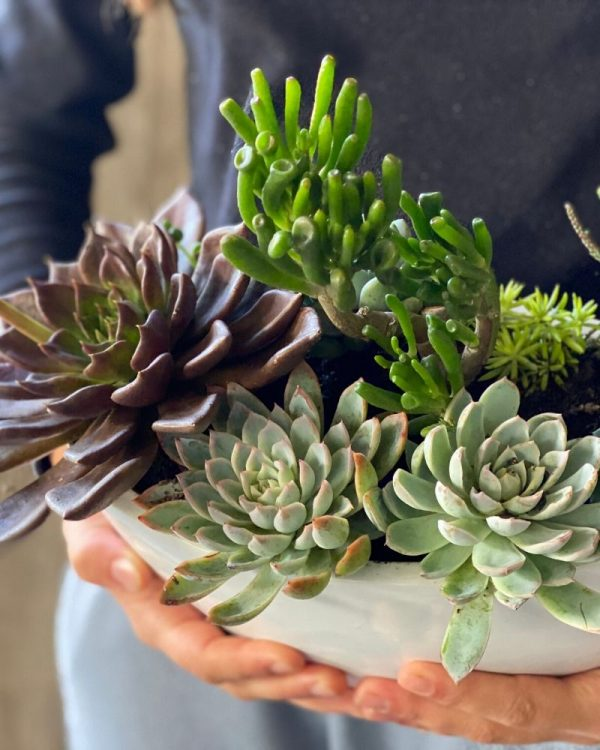 Fresh locally grown succulents